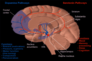 heroin-effects-your-brain